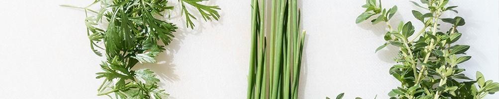 Sélection de Plants Aromatiques |Adapei